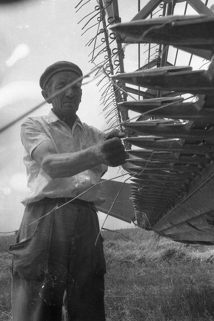 A kombájn fogazatának-pengéinek ellenőrzése aratás közben 1989.júliusában